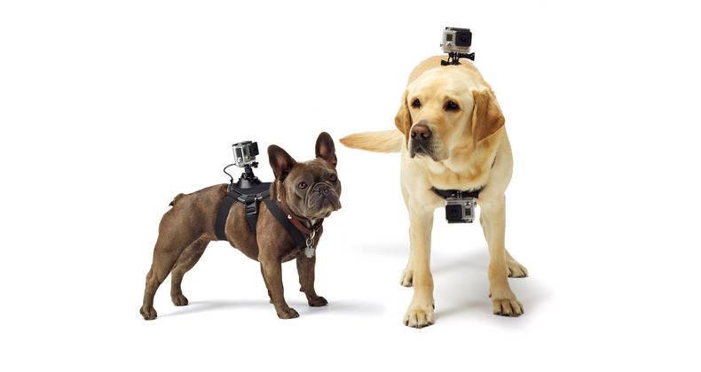 GoPro fetch culturageek.com.ar perros