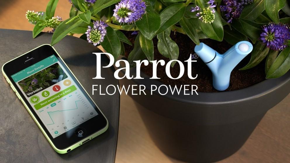 Parrot flower power