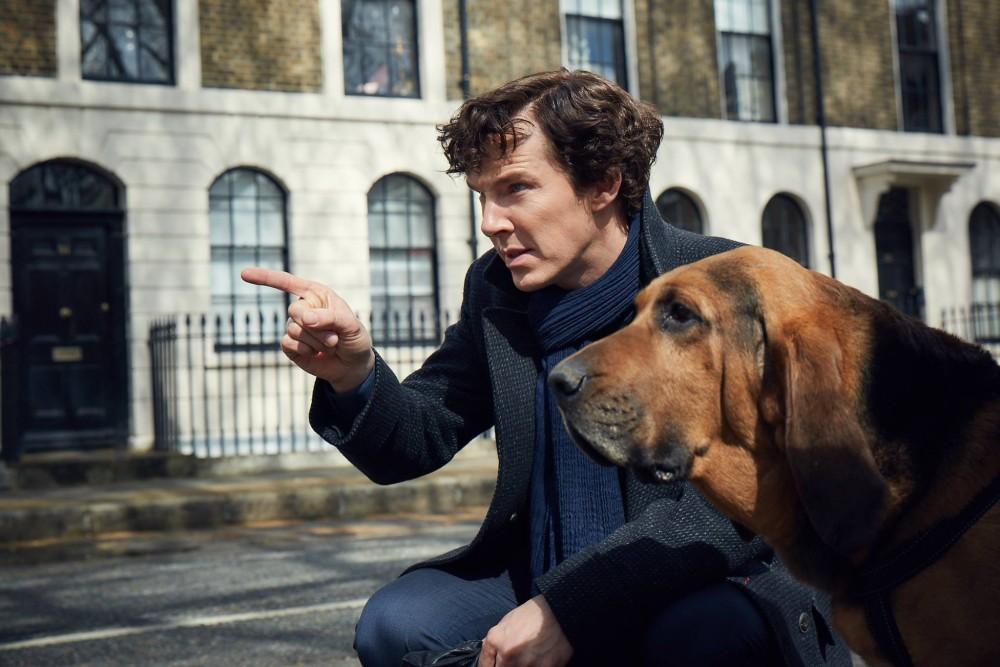Sherlock dog b culturageek.com.ar